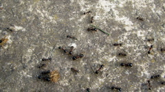 Busy ants Stock Footage