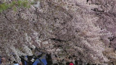 CHERRY BLOSSOM TIDAL BASIN TREE Stock Footage