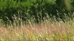 Pasture Stock Footage
