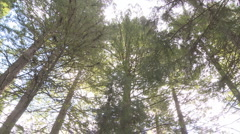 Redwoods treetop rotate Stock Footage