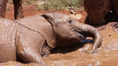 Baby elephant mud P5 Stock Footage