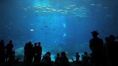 Magical Aquarium Stock Footage