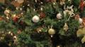 Christmas Trees Footage