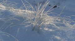 Frosty grass in the snow - stock footage