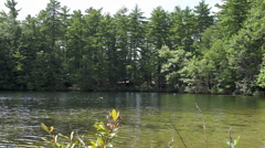 Cove with Pine trees_1 - stock footage