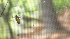 Insect on screen door Stock Footage