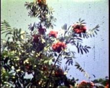 Garden courtyard Stock Footage