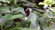 Rotate around Butterfly on Leaf Stock Footage