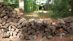 Woodpile_05 Stock Footage
