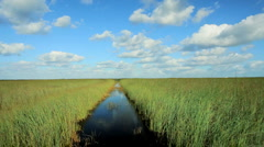 Florida Everglades Ecosystem Stock Footage