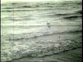 Gulls on the coast Stock Footage