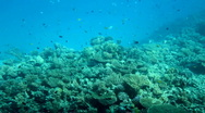Fish among corals under water in Red Sea Stock Footage