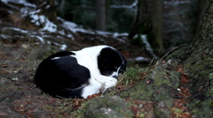 Winter 0027a Black and White Dog Sleeping Under A Big Tree Stock Footage