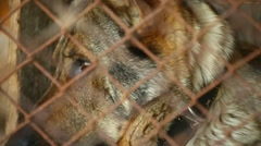 old dog in a cage - stock footage