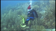 Stock Video Footage of diver Christmass underwater diving video