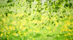 Green Leaves, Shallow Focus Stock Footage