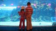 Children at aquarium  Stock Footage