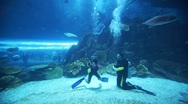 Two divers in oceanarium inside Dubai Mall Stock Footage