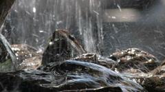 Rainfall - stock footage