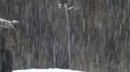 Stock Video Footage of The brown bear walking in snow at forest winter