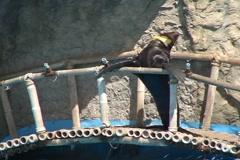 Seal Karuzo dv - stock footage