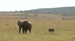 Elephants savana P10 Stock Footage