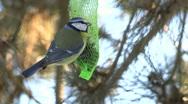 Stock Video Footage of bird