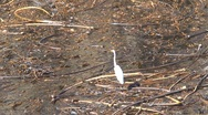 Stock Video Footage of Bird at the water Westcoast, California, United States
