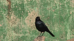 Bird, California, United States Stock Footage