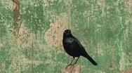 Stock Video Footage of Bird, California, United States