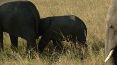Elephants savana P5 Stock Footage