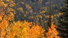 Autumn Dappled Valley Stock Footage