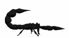 Scorpion Stock Footage