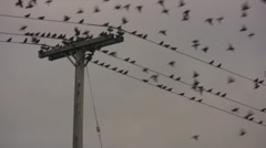 Birds on a Wire Take Flight - stock footage