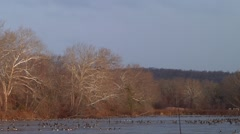 Geese Flying Over Lake Stock Footage