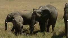 Elephants savana P7 Stock Footage
