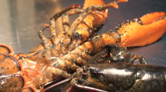 Exhibition of live lobster with cooking elements Stock Footage
