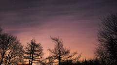 Night sky over crooked tree Stock Footage