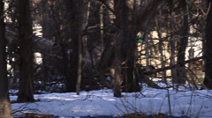 Deer running through snowy woods Stock Footage