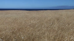Dry grassland with sea and sky - stock footage