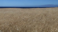 Stock Video Footage of Dry grassland with sea and sky
