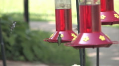 Humming Birds 3 Stock Footage
