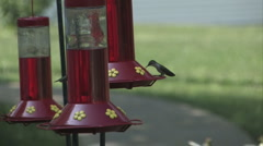 Humming Birds Stock Footage