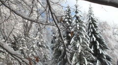 Winter landscape with forests and snowy mountains Stock Footage