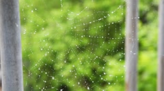 Spiderweb with drops of water waving by wind Stock Footage