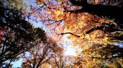 Fall Leaves in Central Park Stock Footage