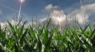 Stock Video Footage of Nuclear Missile Launches over Corn Field