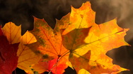 Stock Video Footage of Fall Leaves Smoke