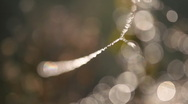 Spider's webs on the twig. Close up. Stock Footage