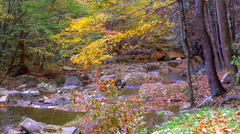 Mountain creek autumn Stock Footage